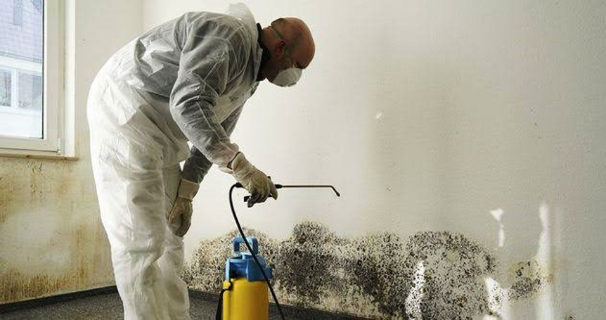 The Dangers of Mold Growing in your Home